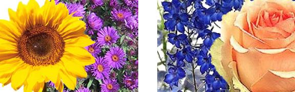 choose Wedding Flowers