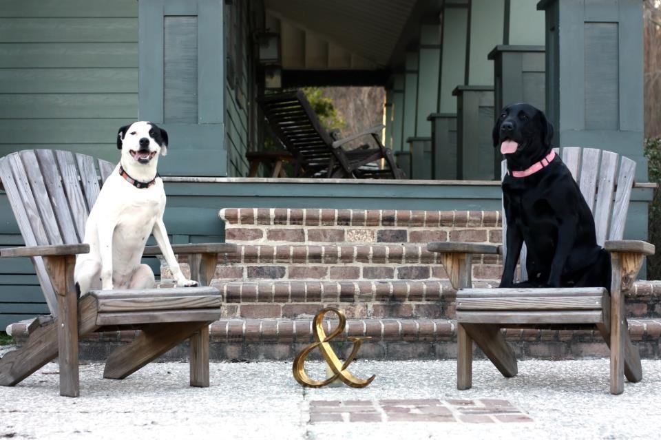 Model Puppies