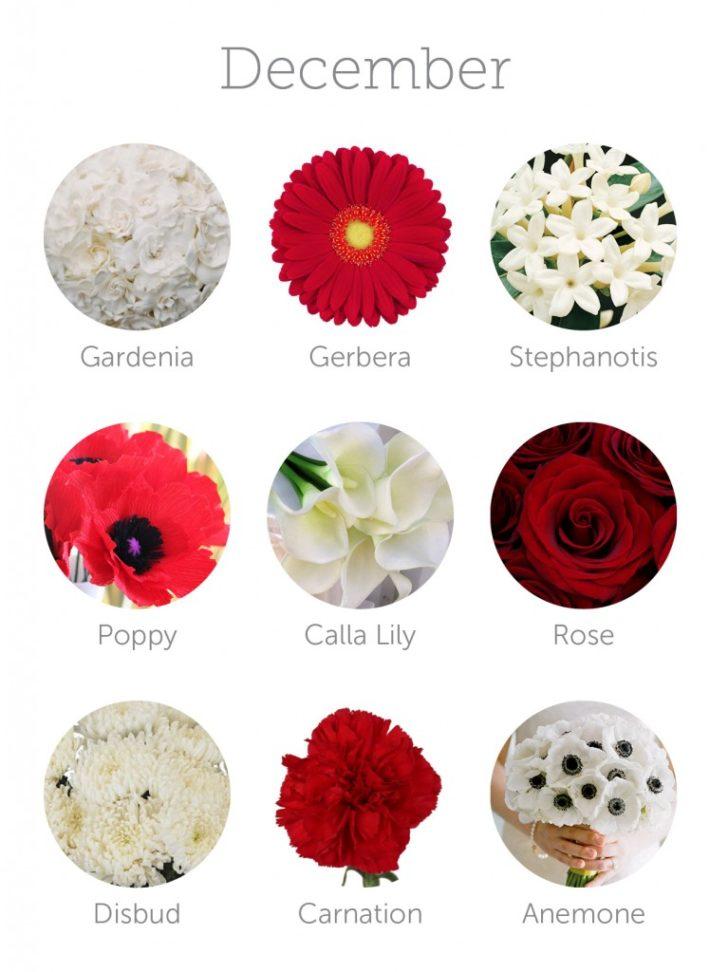 wedding flowers in season in December | in-season flowers for December