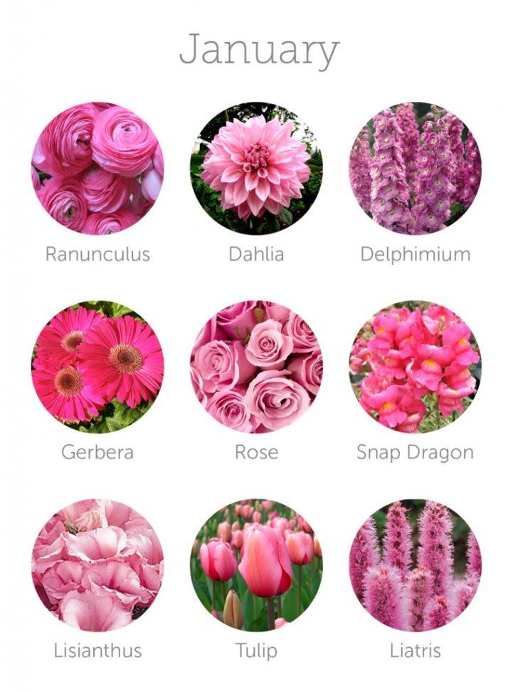 wedding flowers in season in January | in-season flowers for January