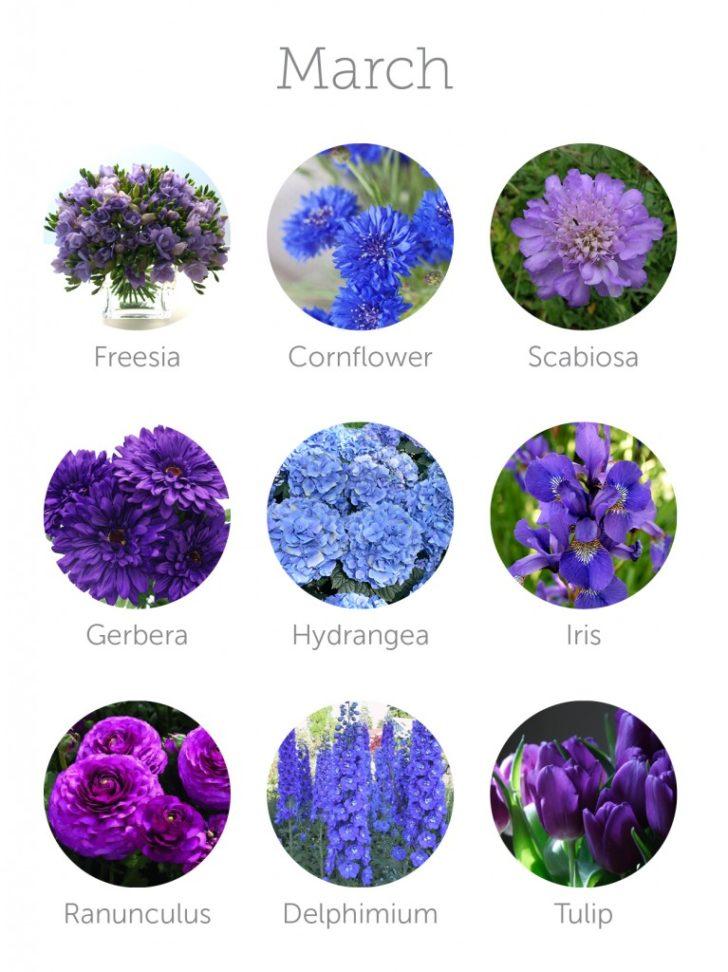 wedding flowers in season in March | in-season flowers for March