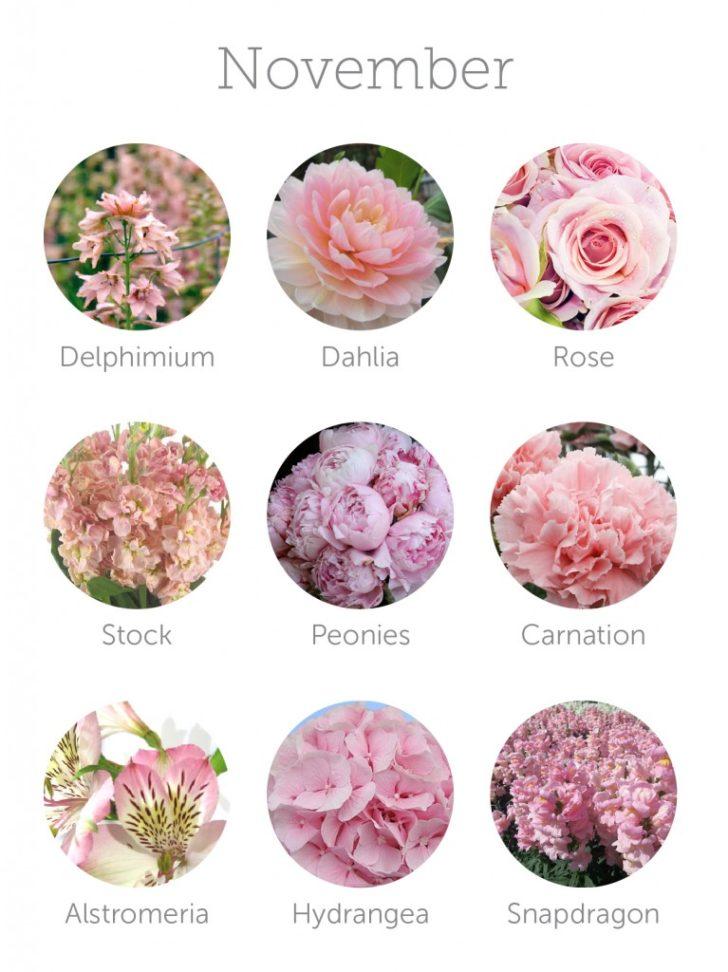 wedding flowers in season in November | in-season flowers for November