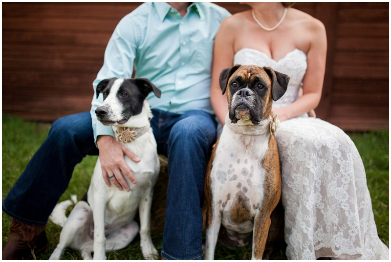 wedding dog photos