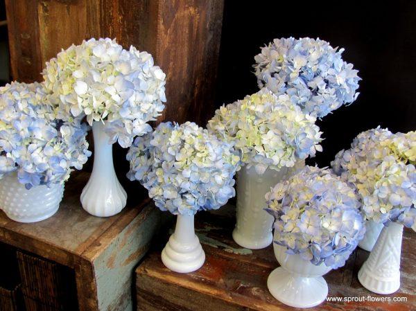 Simple Blue Hydrangeas in Milk Vases