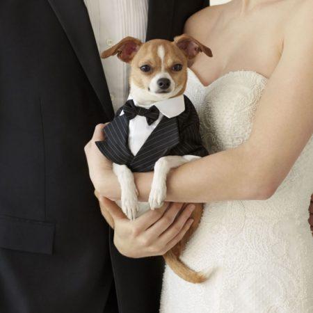 martha stewart pet wedding collection