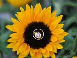 sunflower wedding ring