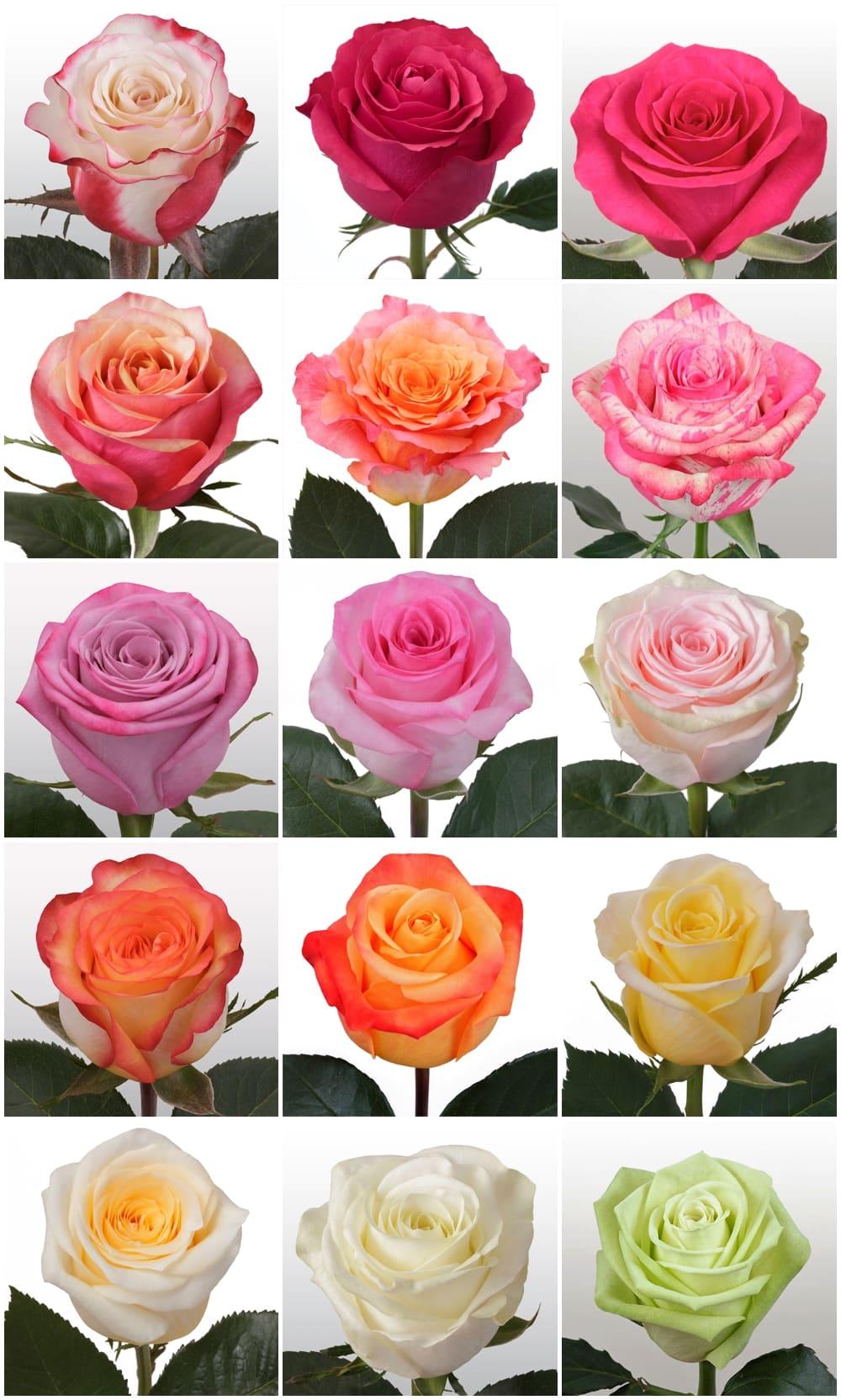 wholesaleflowers roses