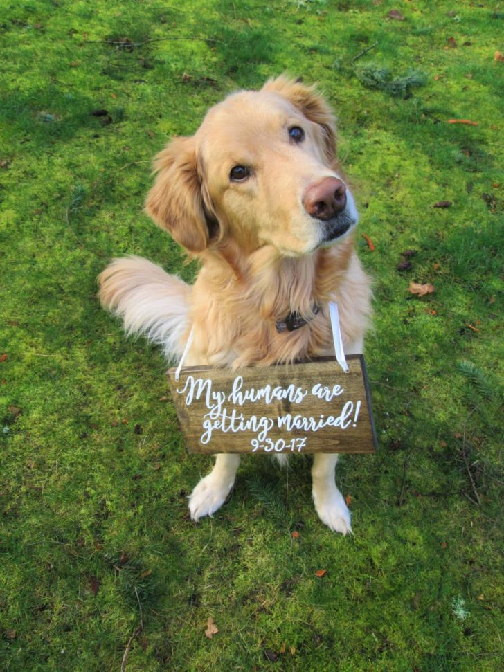Dog Wedding sign via PerryHillRustics on Etsy