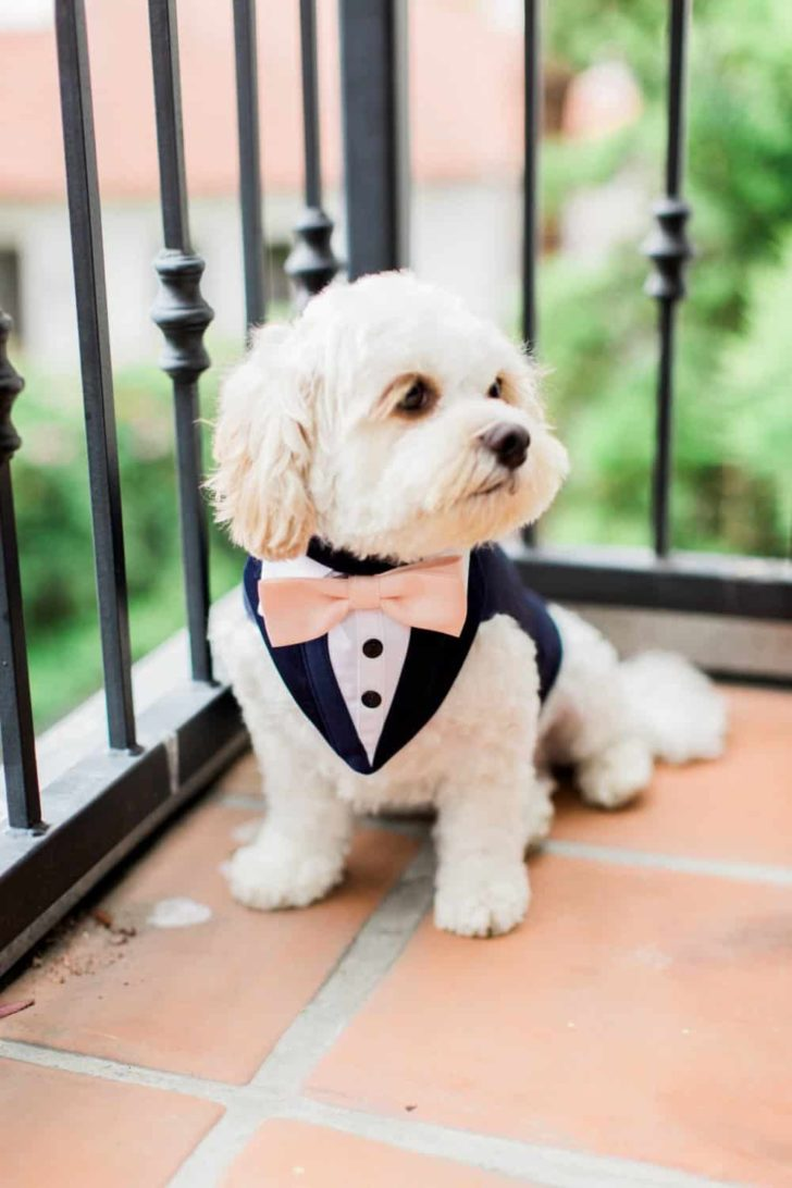dog tux oliviasdoggiedesigns