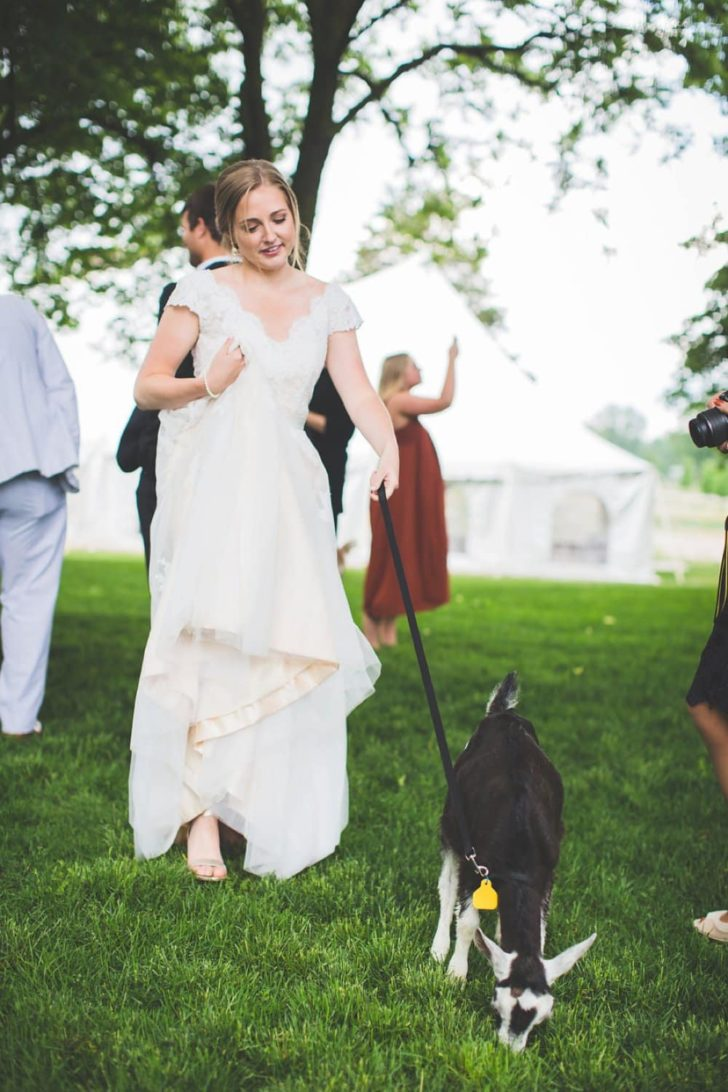 bride and goat