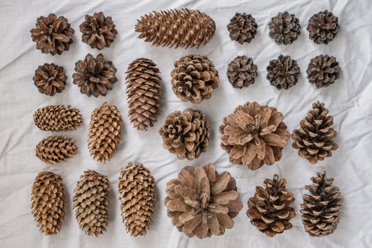 pinecone flowers - DIY eco-friendly wedding decor
